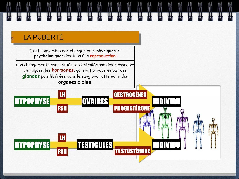 LA PUBERTÉ Cest lensemble des changements physiques et psychologiques destinés à la reproduction. Ces changements sont initiés et contrôlés par des me