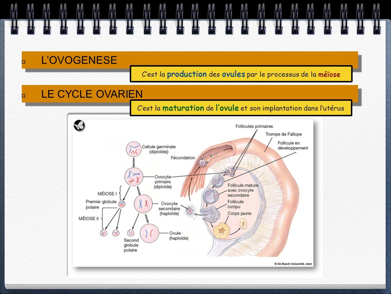 LOVOGENESE LE CYCLE OVARIEN Cest la maturation de lovule et son implantation dans lutérus Cest la production des ovules par le processus de la méïose