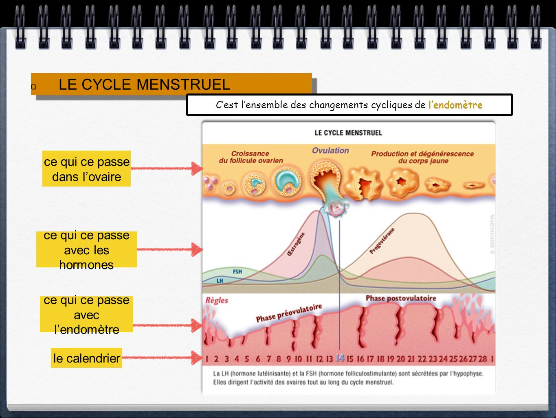 LE CYCLE MENSTRUEL Cest lensemble des changements cycliques de lendomètre ce qui ce passe dans lovaire ce qui ce passe avec les hormones ce qui ce pas