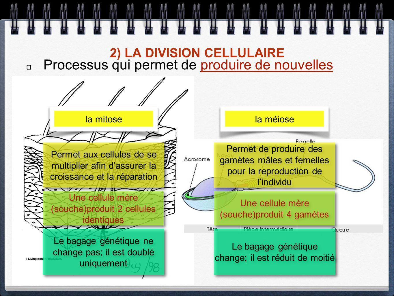 2) LA DIVISION CELLULAIRE Processus qui permet de produire de nouvelles cellules. la mitosela méiose Permet aux cellules de se multiplier afin dassure