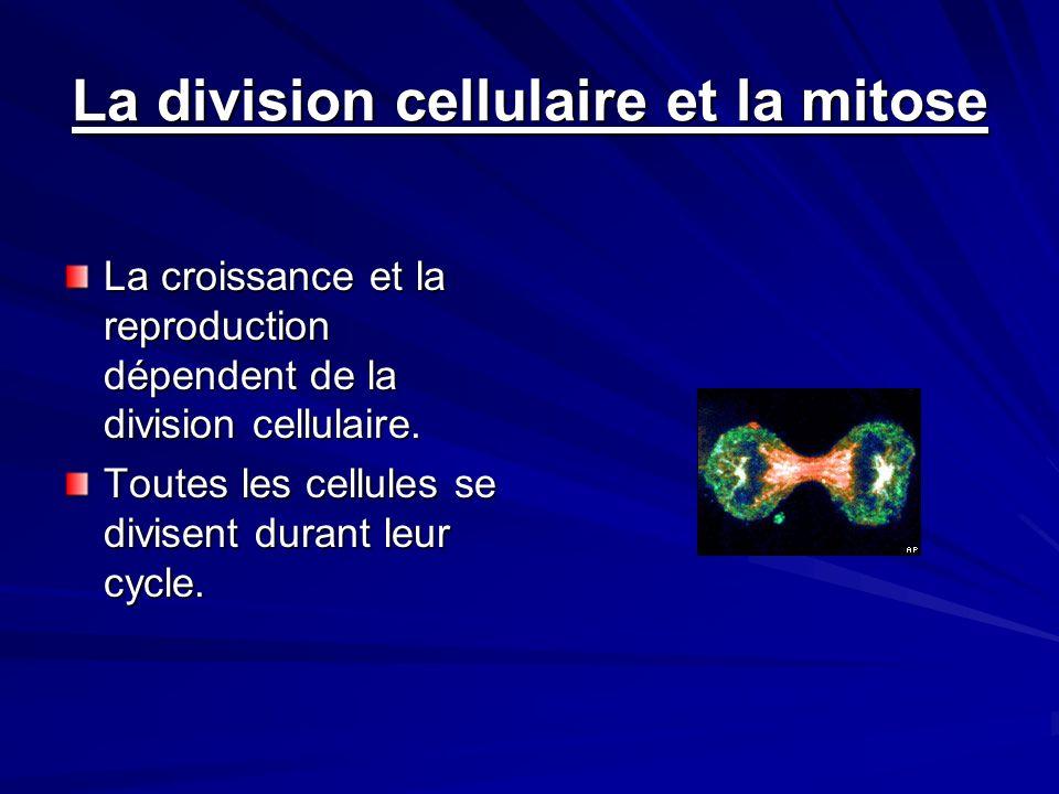 La division cellulaire et la mitose La croissance et la reproduction dépendent de la division cellulaire. Toutes les cellules se divisent durant leur