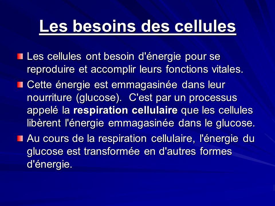 Les besoins des cellules Les cellules ont besoin d'énergie pour se reproduire et accomplir leurs fonctions vitales. Cette énergie est emmagasinée dans