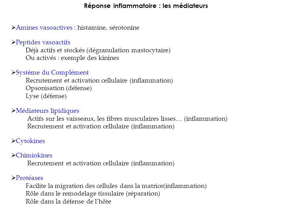 Réponse inflammatoire : les médiateurs Amines vasoactives : histamine, sérotonine Peptides vasoactifs Déjà actifs et stockés (dégranulation mastocytaire) Ou activés : exemple des kinines Système du Complément Recrutement et activation cellulaire (inflammation) Opsonisation (défense) Lyse (défense) Médiateurs lipidiques Actifs sur les vaisseaux, les fibres musculaires lisses… (inflammation) Recrutement et activation cellulaire (inflammation) Cytokines Chimiokines Recrutement et activation cellulaire (inflammation) Protéases Facilite la migration des cellules dans la matrice(inflammation) Rôle dans le remodelage tissulaire (réparation) Rôle dans la défense de lhôte