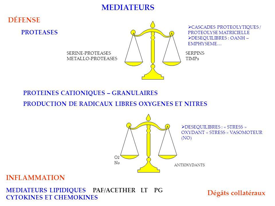 PROTEASES SERINE-PROTEASES METALLO-PROTEASES SERPINS TIMPs CASCADES PROTEOLYTIQUES / PROTEOLYSE MATRICIELLE DESEQUILIBRES : OANH – EMPHYSEME… PROTEINES CATIONIQUES – GRANULAIRES INFLAMMATION MEDIATEURS LIPIDIQUES PAF/ACETHER LT PG CYTOKINES ET CHEMOKINES DESEQUILIBRES : « STRESS » OXYDANT « STRESS » VASOMOTEUR (NO) ANTIOXYDANTS PRODUCTION DE RADICAUX LIBRES OXYGENES ET NITRES MEDIATEURS DÉFENSE Dégâts collatéraux
