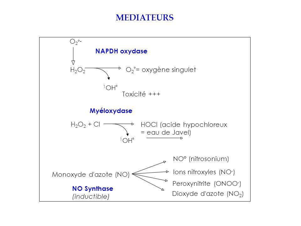 MEDIATEURS O2°O2° O 2 ° = oxygène singuletH2O2H2O2 Toxicité +++ 1 OH ° NAPDH oxydase H 2 O 2 + Cl HOCl (acide hypochloreux = eau de Javel) 1 OH ° Myéloxydase Monoxyde d azote (NO) Dioxyde d azote (NO 2 ) Peroxynitrite (ONOO - ) NO° (nitrosonium) Ions nitroxyles (NO - ) NO Synthase (inductible) -