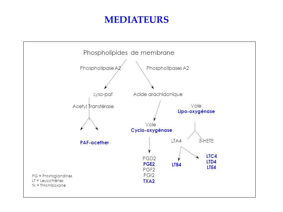 MEDIATEURS Phospholipides de membrane Phospholipase A2Phospholipases A2 Lyso-pafAcide arachidonique Acetyl Transférase Voie Cyclo-oxygénase PAF-acether Voie Lipo-oxygénase LTA4 5-HETE LTB4 LTC4 LTD4 LTE4 PGD2 PGE2 PGF2 PGI2 TXA2 PG = Prostaglandines LT = Leucotriènes Tx = Thromboxane