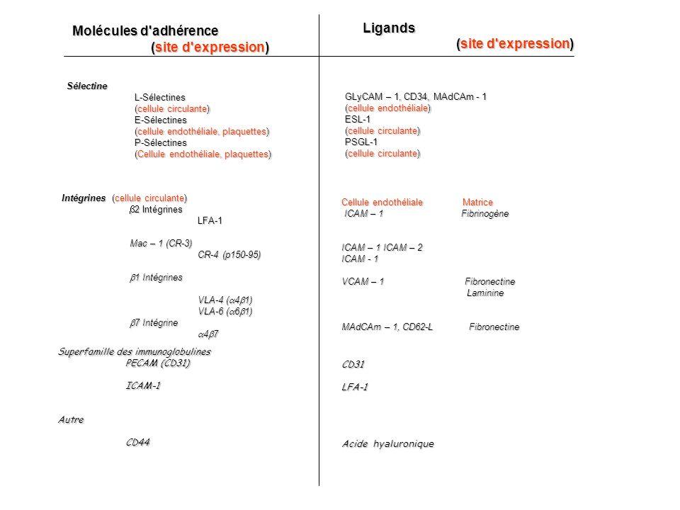 Superfamille des immunoglobulines PECAM (CD31) ICAM-1AutreCD44 CD31LFA-1 Acide hyaluronique Molécules d adhérence (site d expression) (site d expression)Ligands SélectineL-Sélectines (cellule circulante) E-Sélectines (cellule endothéliale, plaquettes) P-Sélectines (Cellule endothéliale, plaquettes) GLyCAM – 1, CD34, MAdCAm - 1 (cellule endothéliale) ESL-1 (cellule circulante) PSGL-1 Intégrines (cellule circulante) 2 Intégrines 2 Intégrines LFA-1 Mac – 1 (CR-3) CR-4 (p150-95) 1 Intégrines 1 Intégrines VLA-4 ( 4 1) VLA-6 ( 6 1) 7 Intégrine 7 Intégrine 4 7 4 7 Cellule endothéliale Matrice ICAM – 1 Fibrinogène ICAM – 1 Fibrinogène ICAM – 1 ICAM – 2 ICAM - 1 VCAM – 1 Fibronectine Laminine Laminine MAdCAm – 1, CD62-L Fibronectine