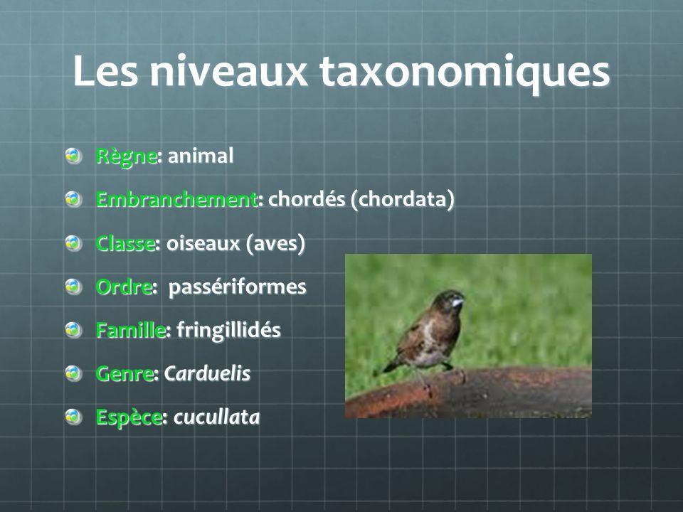 Les niveaux taxonomiques Règne: animal Embranchement: chordés (chordata) Classe: oiseaux (aves) Ordre: passériformes Famille: fringillidés Genre: Card