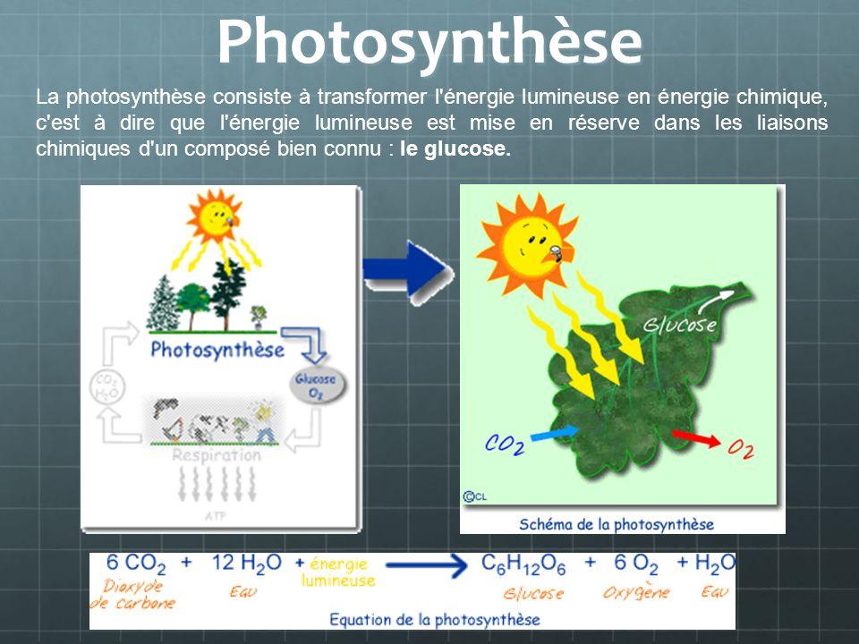 Photosynthèse La photosynthèse consiste à transformer l'énergie lumineuse en énergie chimique, c'est à dire que l'énergie lumineuse est mise en réserv
