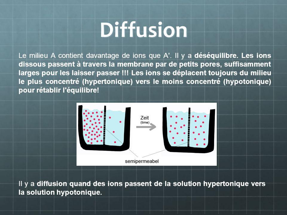 Diffusion Le milieu A contient davantage de ions que A'. Il y a déséquilibre. Les ions dissous passent à travers la membrane par de petits pores, suff
