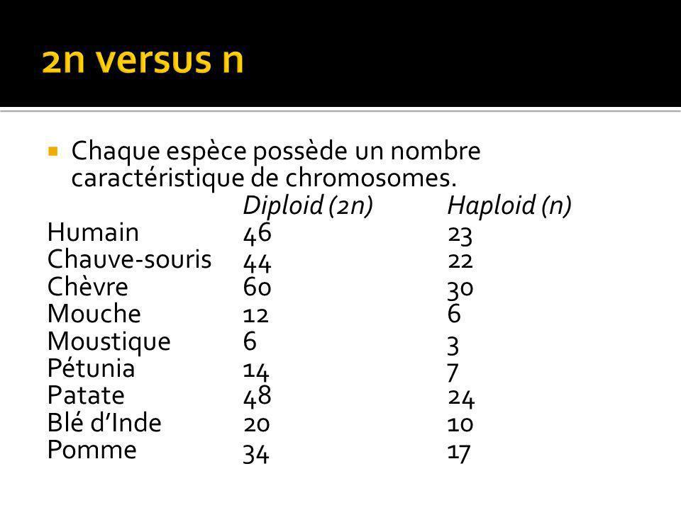 Chaque espèce possède un nombre caractéristique de chromosomes.