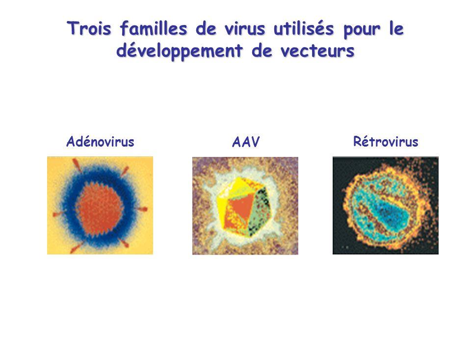 Trois familles de virus utilisés pour le développement de vecteurs AAV AdénovirusRétrovirus