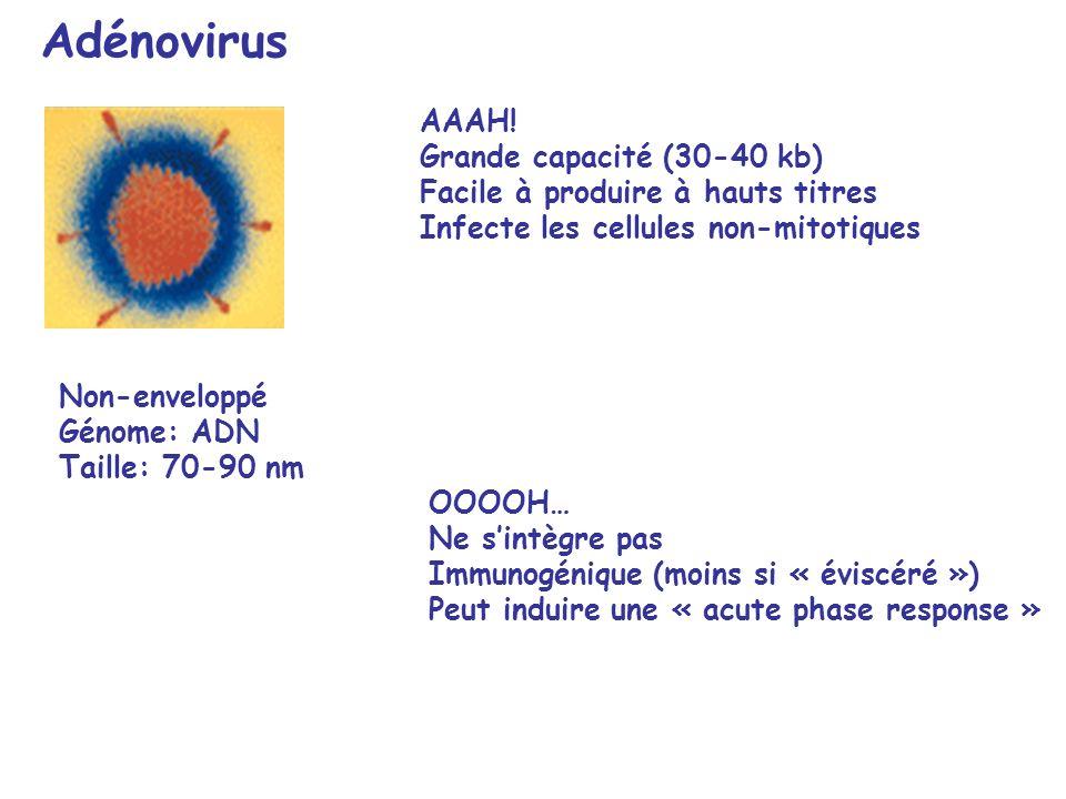 Adénovirus OOOOH… Ne sintègre pas Immunogénique (moins si « éviscéré ») Peut induire une « acute phase response » AAAH.
