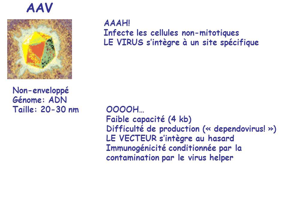 AAV OOOOH… Faible capacité (4 kb) Difficulté de production (« dependovirus.