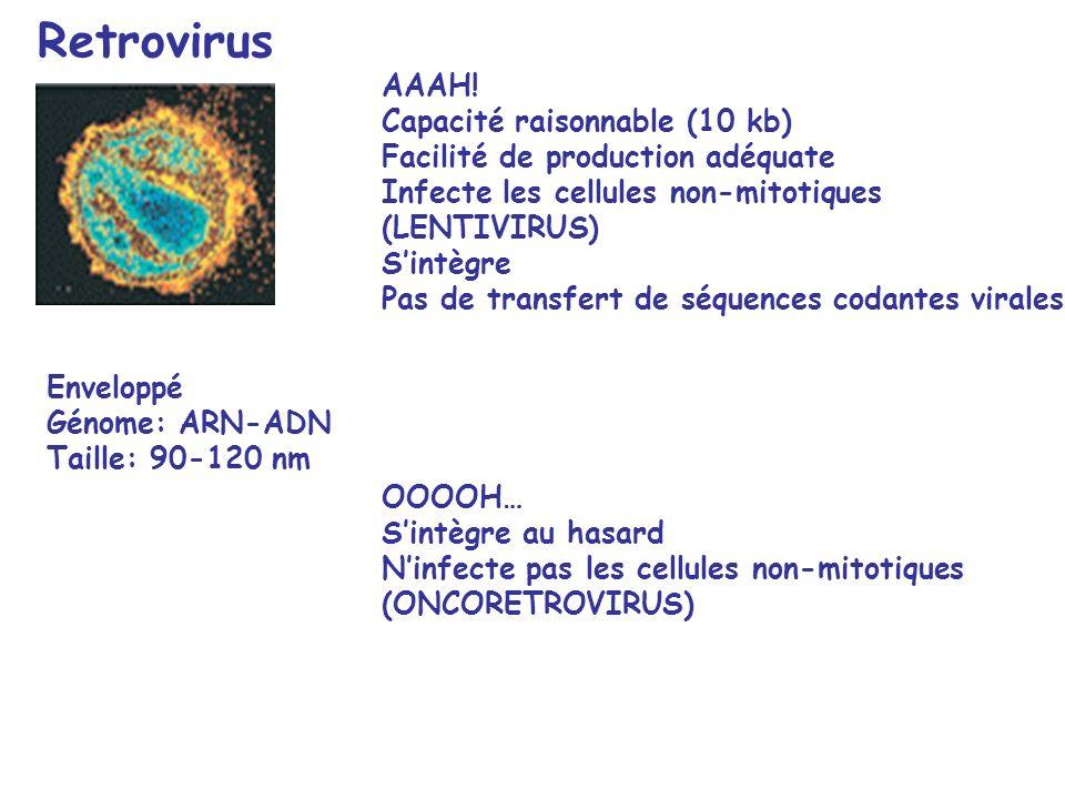 Retrovirus OOOOH… Sintègre au hasard Ninfecte pas les cellules non-mitotiques (ONCORETROVIRUS) AAAH.