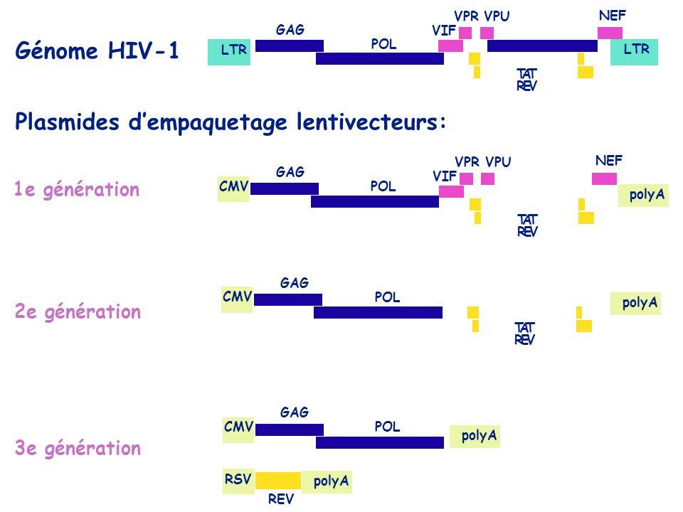 1e génération 2e génération 3e génération Génome HIV-1 TAT REV CMV polyA TAT REV CMV polyA RSV polyA REV VIF VPRVPU NEF TAT REV VIF VPRVPU NEF LTR GAG POL GAG POL GAG POL GAG POL Plasmides dempaquetage lentivecteurs: polyA
