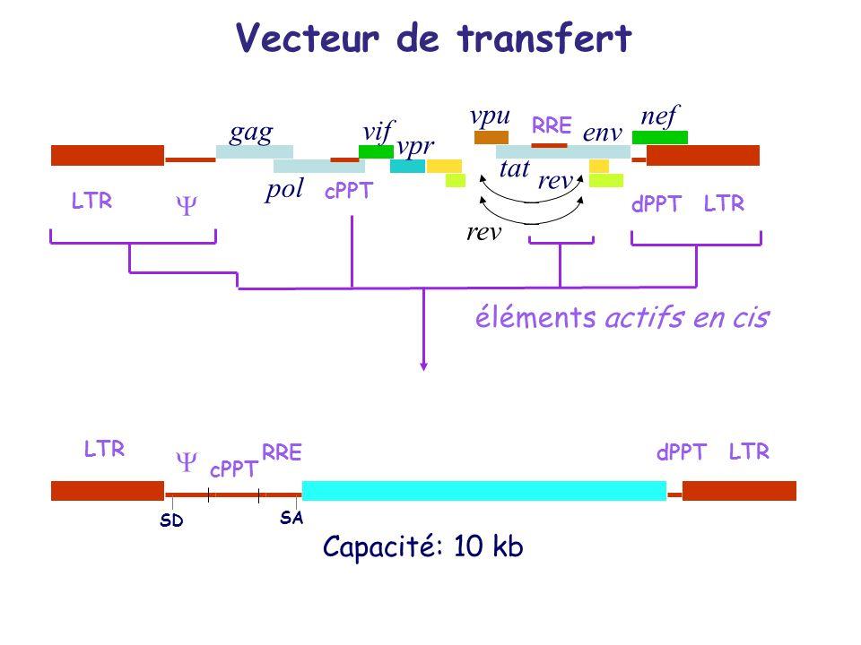 gag pol env éléments actifs en cis LTR dPPT Capacité: 10 kb RRE tat nef vpr vif vpu rev SD SA Vecteur de transfert cPPT RRE cPPT rev LTR dPPT