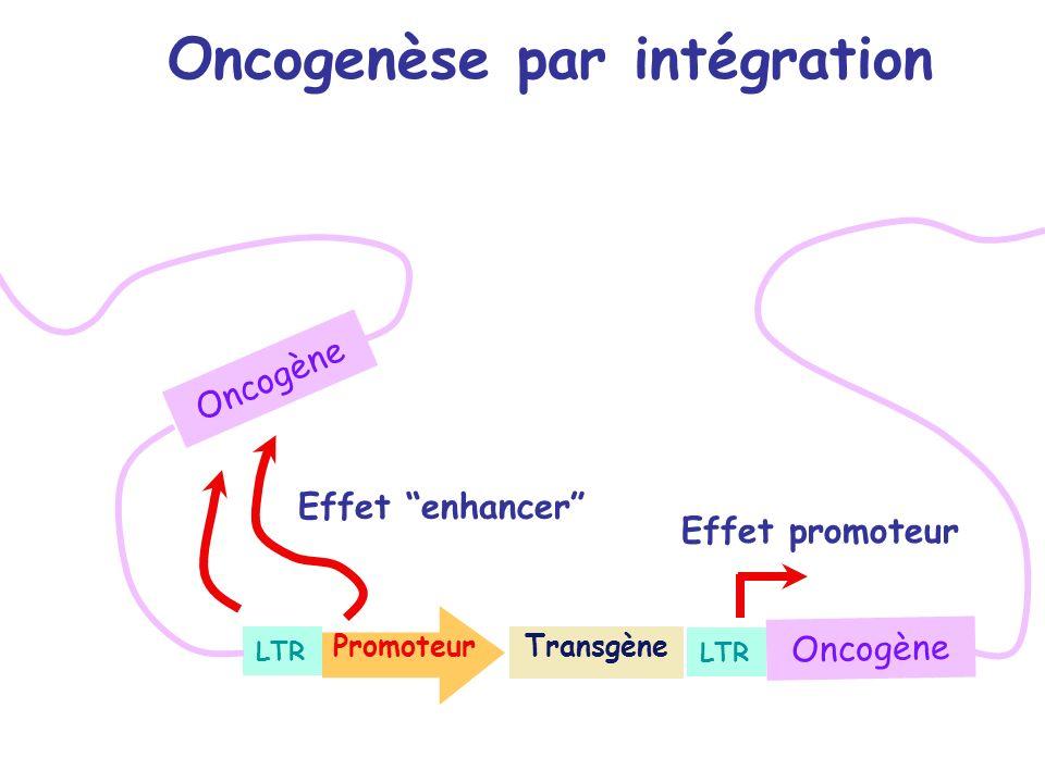 Transgène LTR Promoteur Oncogène Effet promoteur Effet enhancer Oncogenèse par intégration