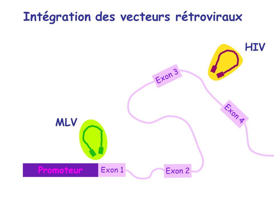 Intégration des vecteurs rétroviraux Promoteur Exon 1 Exon 3 Exon 2 Exon 4 MLV HIV