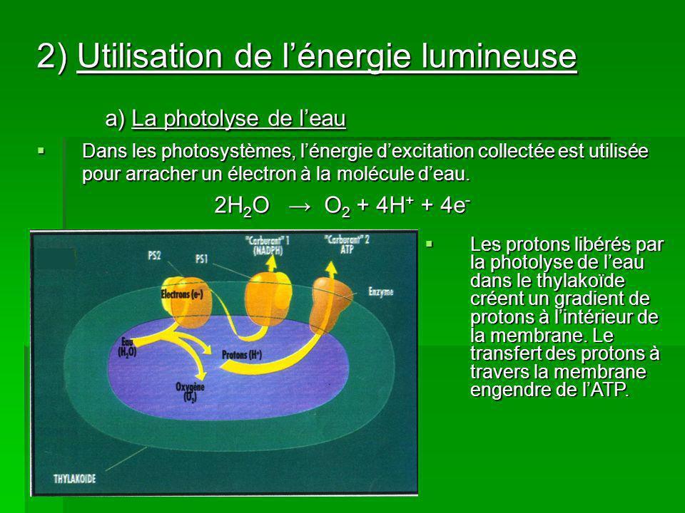 2) Utilisation de lénergie lumineuse a) La photolyse de leau Dans les photosystèmes, lénergie dexcitation collectée est utilisée pour arracher un électron à la molécule deau.