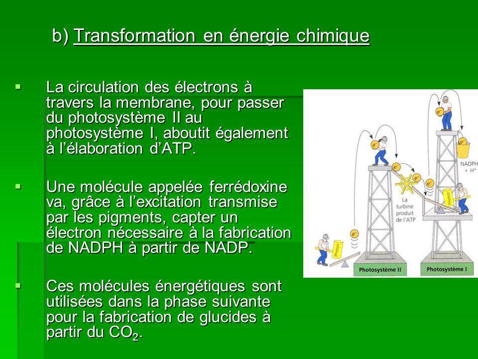 La circulation des électrons à travers la membrane, pour passer du photosystème II au photosystème I, aboutit également à lélaboration dATP.