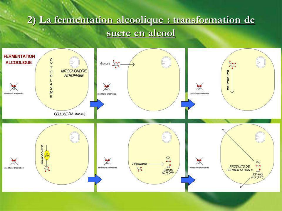 2) La fermentation alcoolique : transformation de sucre en alcool