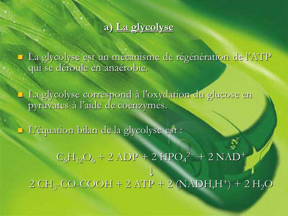 La glycolyse est un mécanisme de régénération de lATP qui se déroule en anaérobie.