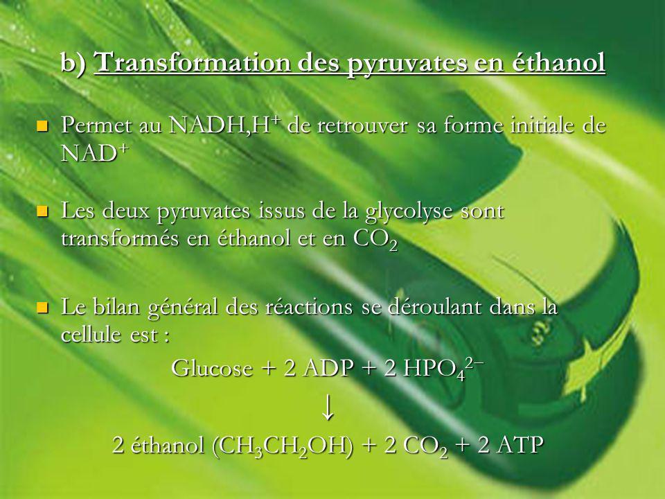 b) Transformation des pyruvates en éthanol Permet au NADH,H + de retrouver sa forme initiale de NAD + Permet au NADH,H + de retrouver sa forme initiale de NAD + Les deux pyruvates issus de la glycolyse sont transformés en éthanol et en CO 2 Les deux pyruvates issus de la glycolyse sont transformés en éthanol et en CO 2 Le bilan général des réactions se déroulant dans la cellule est : Le bilan général des réactions se déroulant dans la cellule est : Glucose + 2 ADP + 2 HPO 4 2 2 éthanol (CH 3 CH 2 OH) + 2 CO 2 + 2 ATP