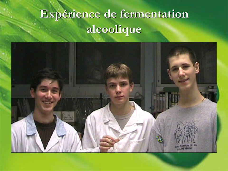 Expérience de fermentation alcoolique