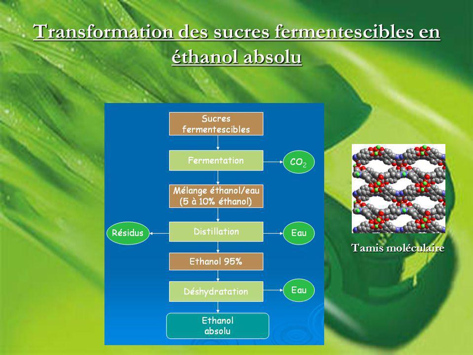 Transformation des sucres fermentescibles en éthanol absolu Tamis moléculaire