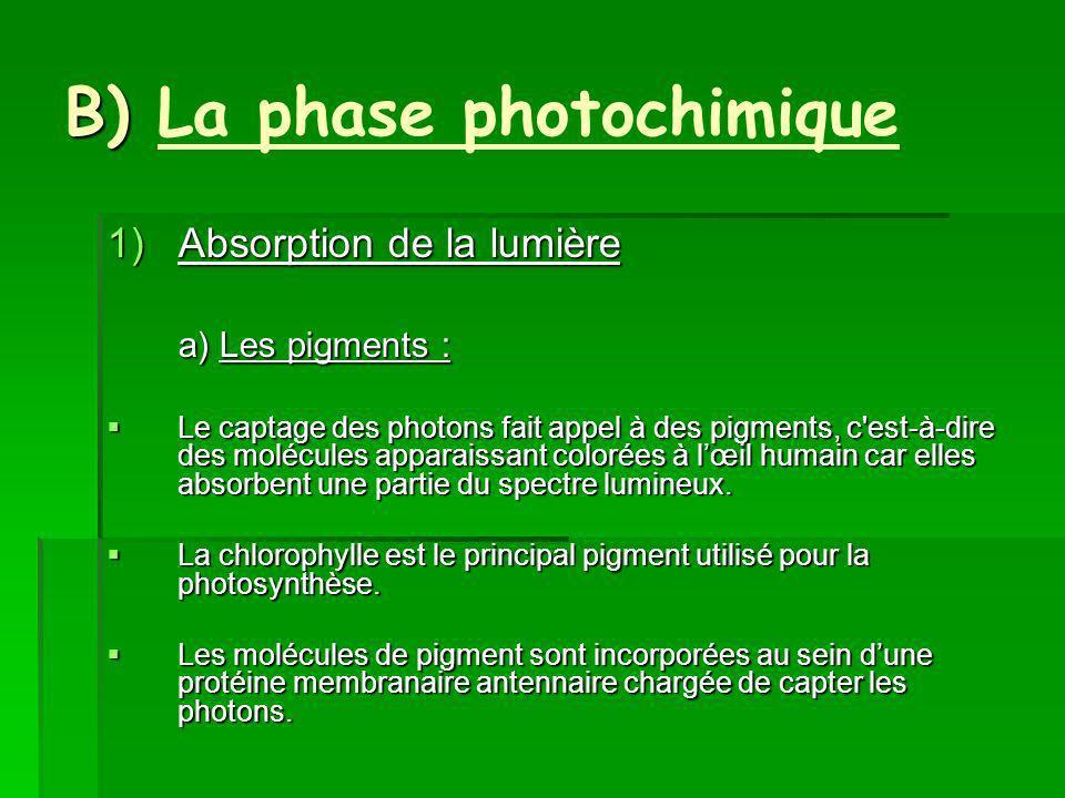 B) B) La phase photochimique 1)Absorption de la lumière a) Les pigments : Le captage des photons fait appel à des pigments, c est-à-dire des molécules apparaissant colorées à lœil humain car elles absorbent une partie du spectre lumineux.