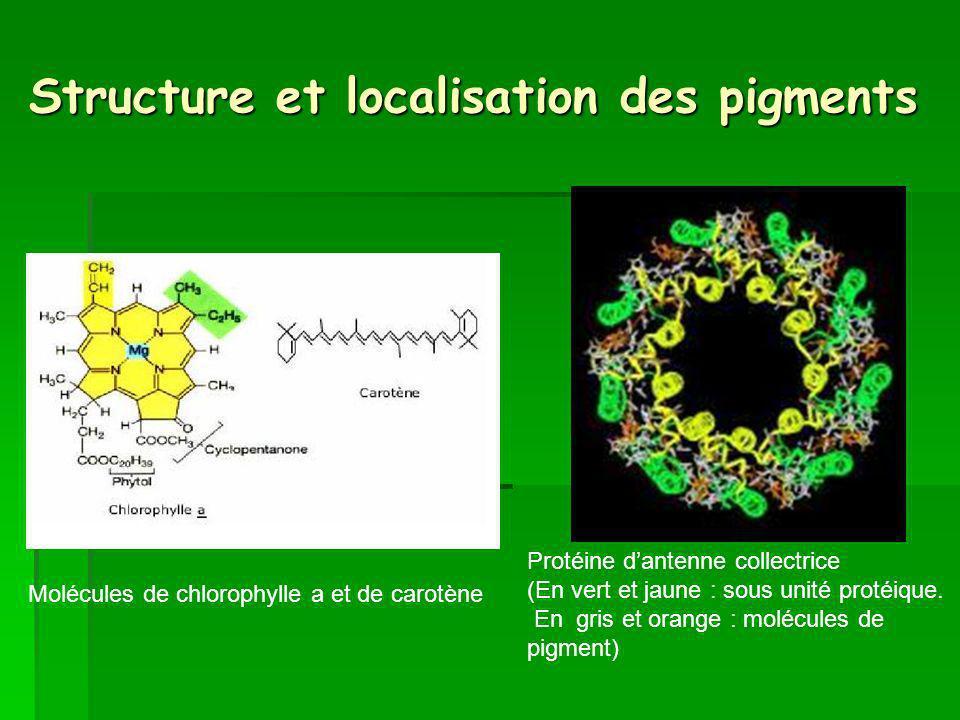 Structure et localisation des pigments Protéine dantenne collectrice (En vert et jaune : sous unité protéique.
