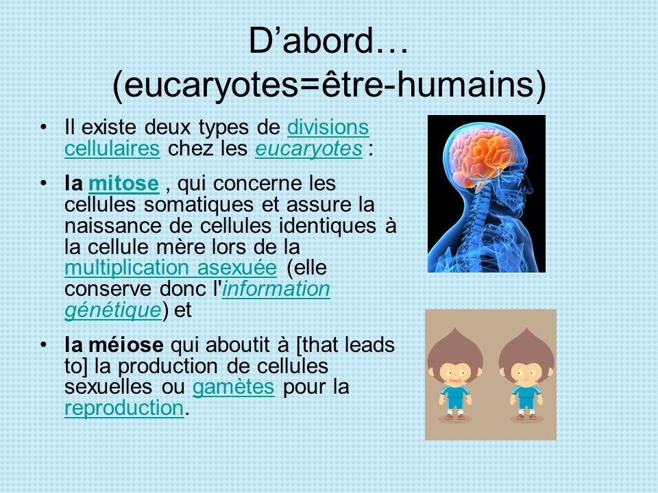 Dabord… (eucaryotes=être-humains) Il existe deux types de divisions cellulaires chez les eucaryotes :divisions cellulaireseucaryotes la mitose, qui co