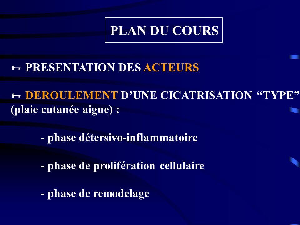 PLAN DU COURS PRESENTATION DES ACTEURS DEROULEMENT DUNE CICATRISATION TYPE (plaie cutanée aigue) : - phase détersivo-inflammatoire - phase de prolifér