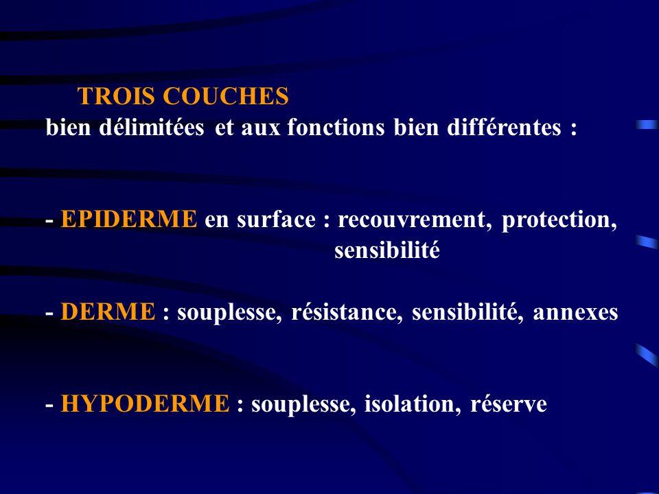 TROIS COUCHES bien délimitées et aux fonctions bien différentes : - EPIDERME en surface : recouvrement, protection, sensibilité - DERME : souplesse, r