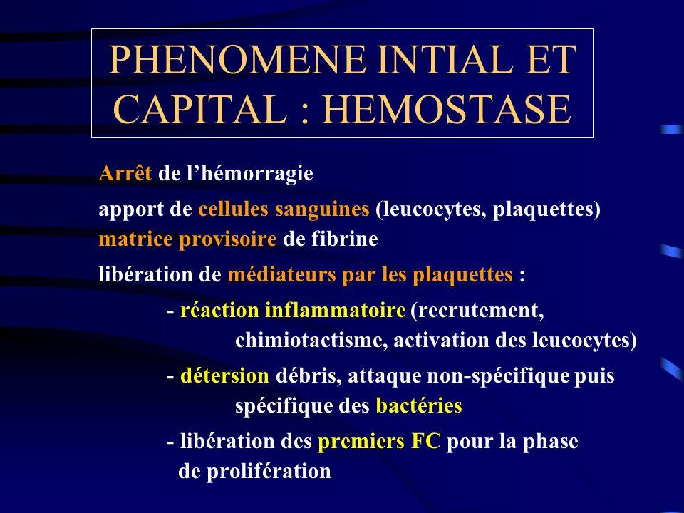 PHENOMENE INTIAL ET CAPITAL : HEMOSTASE Arrêt de lhémorragie apport de cellules sanguines (leucocytes, plaquettes) matrice provisoire de fibrine libér