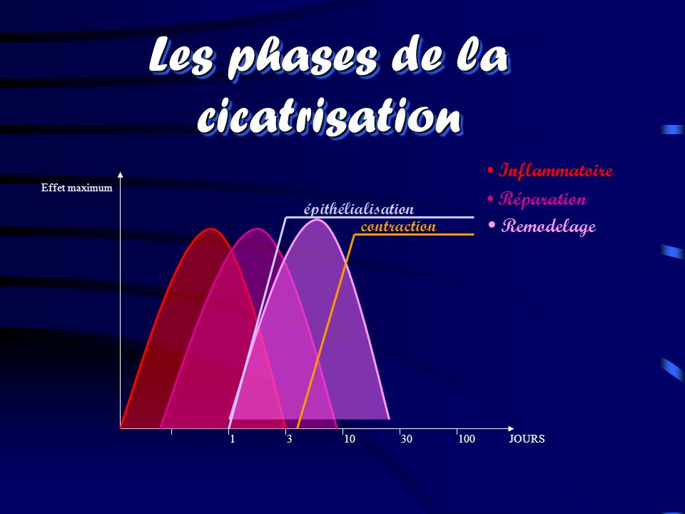 11030100JOURS3 Effet maximum Inflammatoire Réparation Remodelage épithélialisation contraction Les phases de la cicatrisation