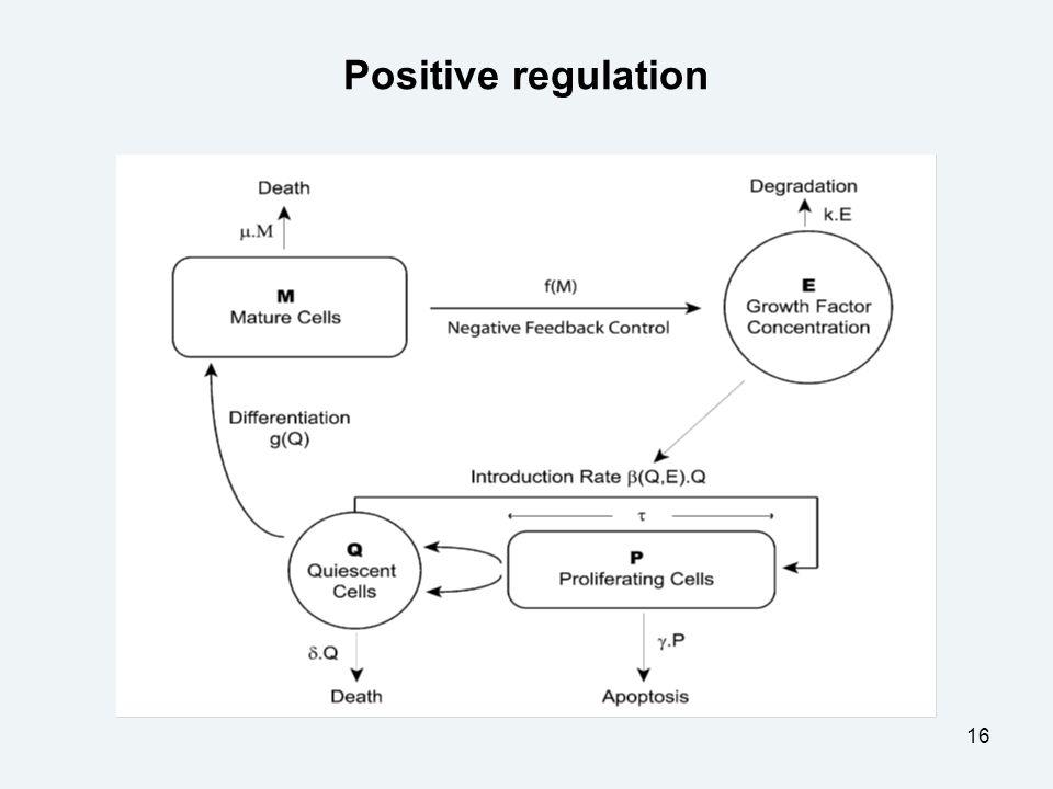 16 Positive regulation
