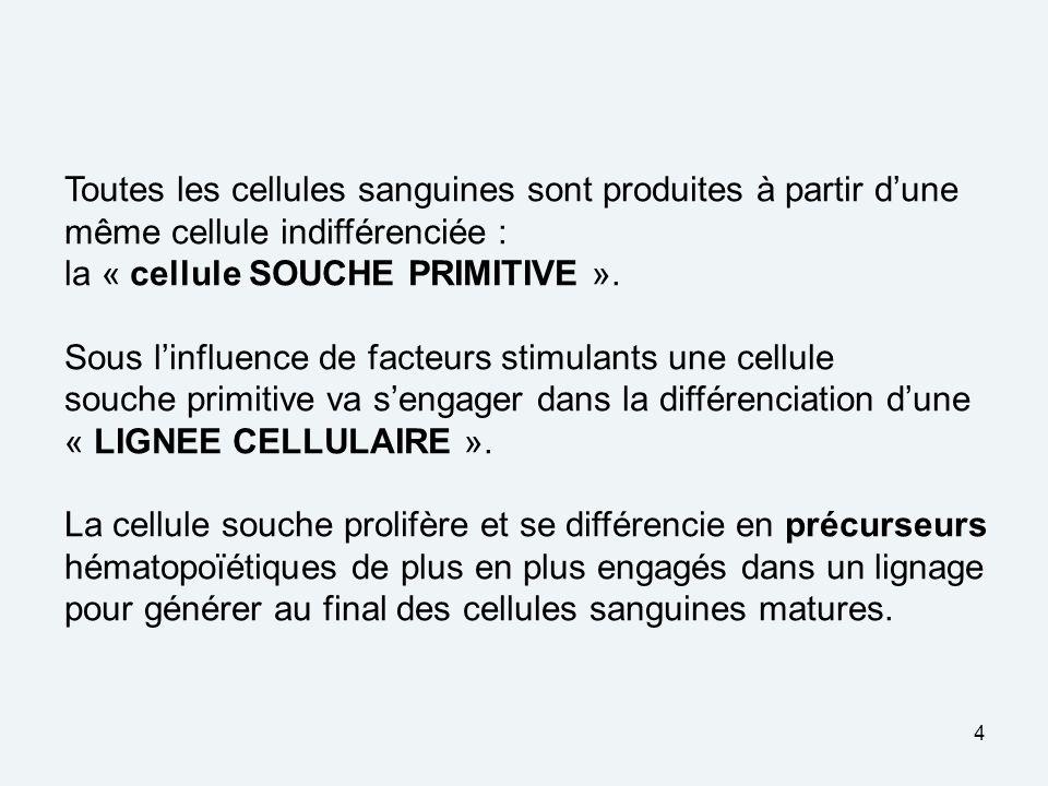 4 Toutes les cellules sanguines sont produites à partir dune même cellule indifférenciée : la « cellule SOUCHE PRIMITIVE ».