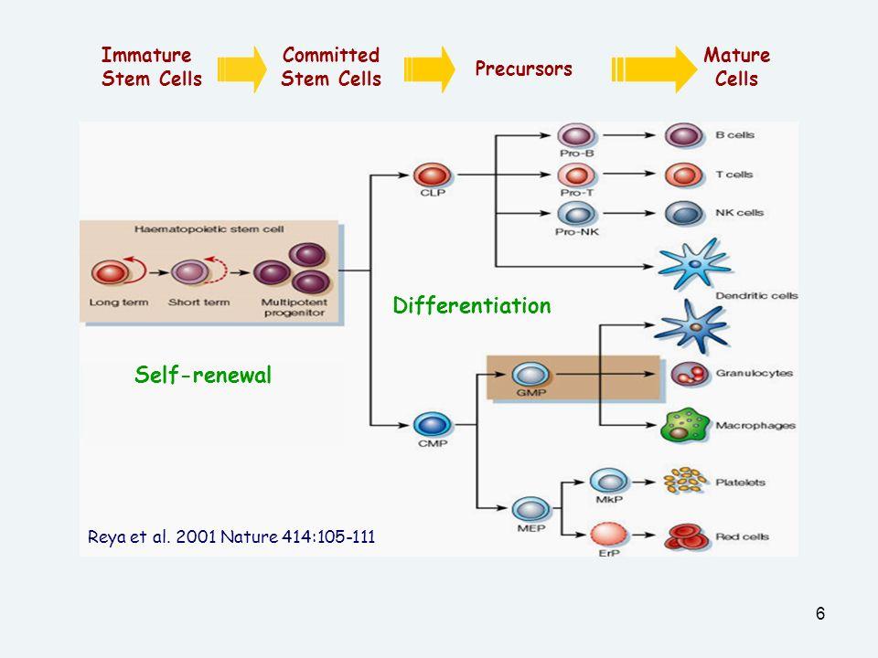 6 Immature Stem Cells Committed Stem Cells Precursors Mature Cells Self-renewal Differentiation Reya et al.