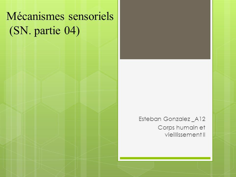 Mécanismes sensoriels (SN. partie 04) Esteban Gonzalez _A12 Corps humain et vieillissement II