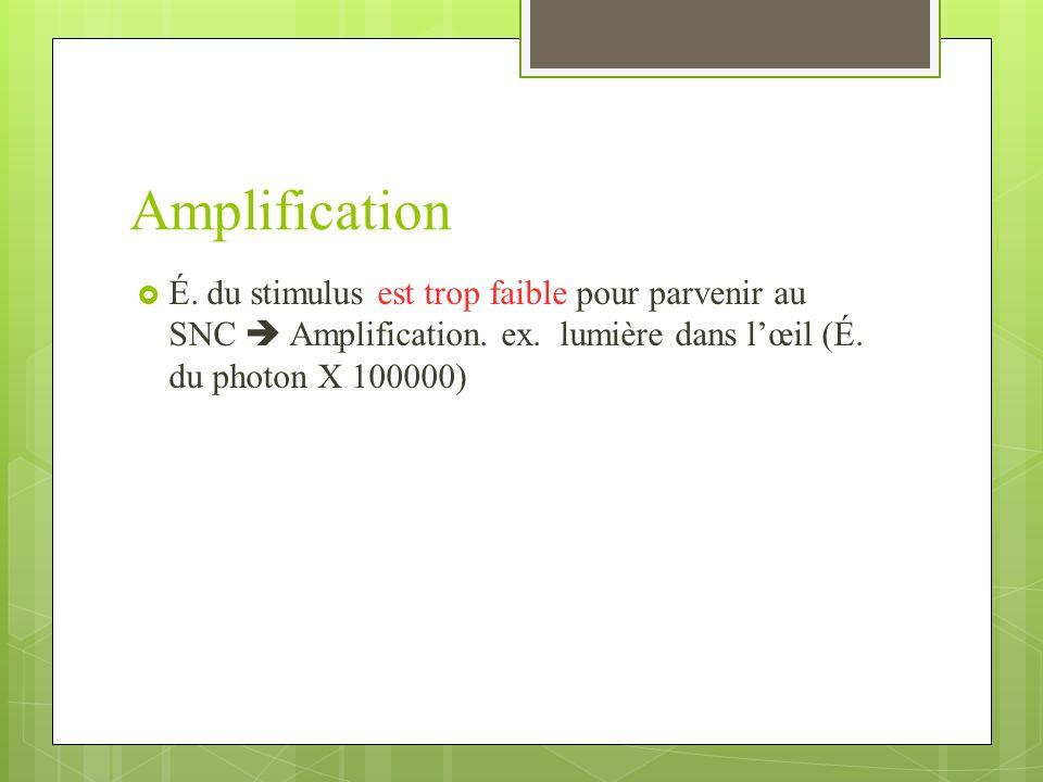 Amplification É.du stimulus est trop faible pour parvenir au SNC Amplification.
