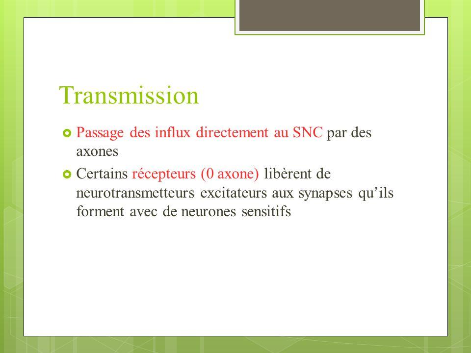 Transmission Passage des influx directement au SNC par des axones Certains récepteurs (0 axone) libèrent de neurotransmetteurs excitateurs aux synapses quils forment avec de neurones sensitifs