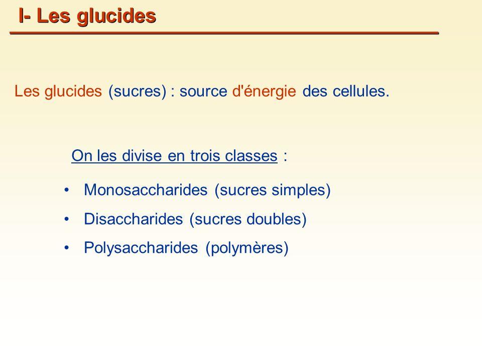 Les glucides (sucres) : source d énergie des cellules.