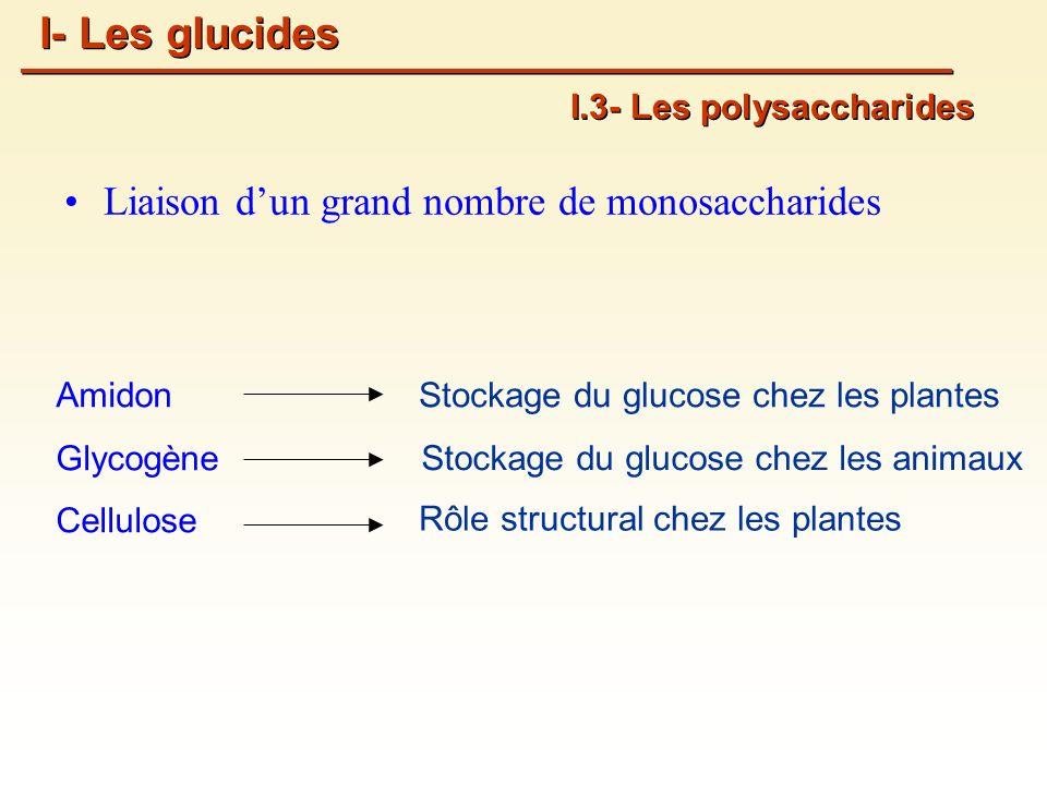 Amidon Glycogène Cellulose I.3- Les polysaccharides Liaison dun grand nombre de monosaccharides Stockage du glucose chez les plantes Stockage du glucose chez les animaux Rôle structural chez les plantes I- Les glucides