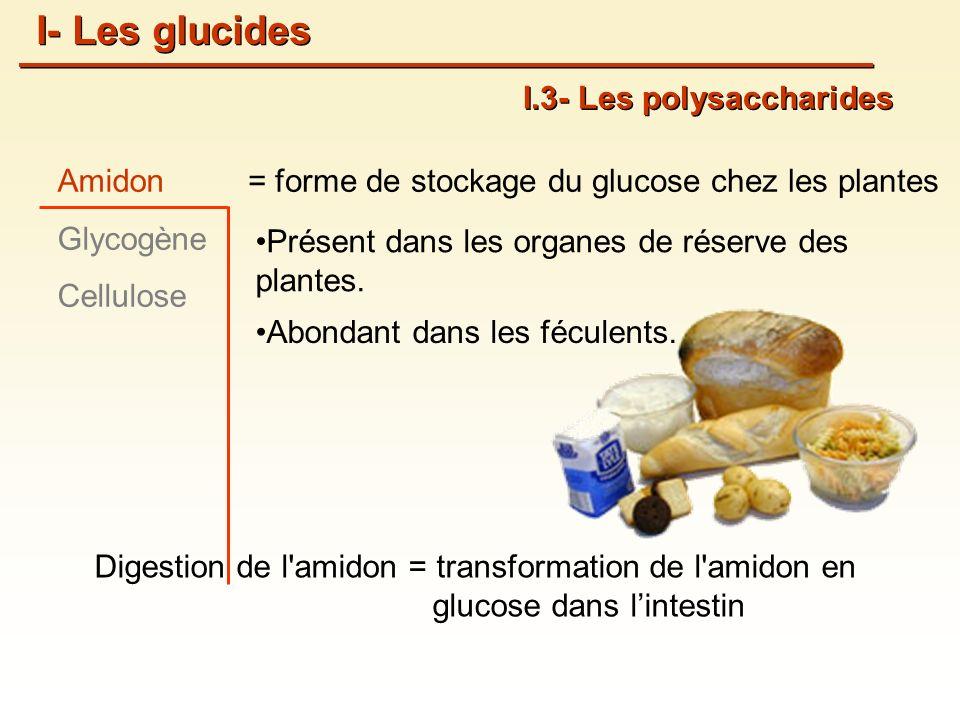 = forme de stockage du glucose chez les plantesAmidon Glycogène Cellulose I.3- Les polysaccharides Présent dans les organes de réserve des plantes.