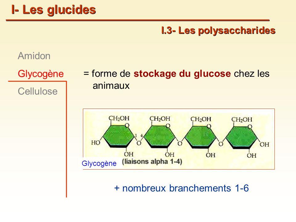 = forme de stockage du glucose chez les animaux I.3- Les polysaccharides Amidon Glycogène Cellulose I- Les glucides Glycogène + nombreux branchements 1-6