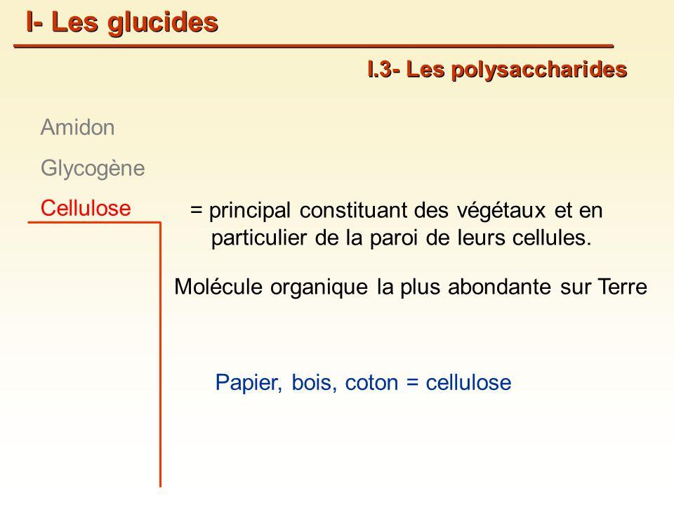 = principal constituant des végétaux et en particulier de la paroi de leurs cellules.