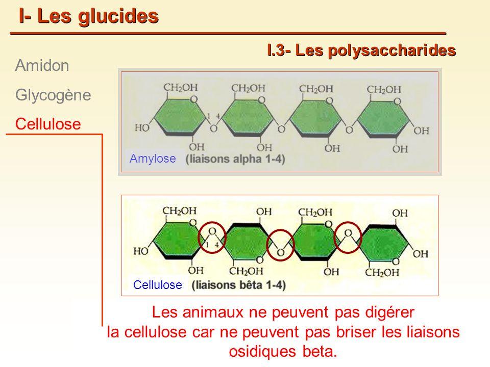 Amylose Cellulose Les animaux ne peuvent pas digérer la cellulose car ne peuvent pas briser les liaisons osidiques beta.
