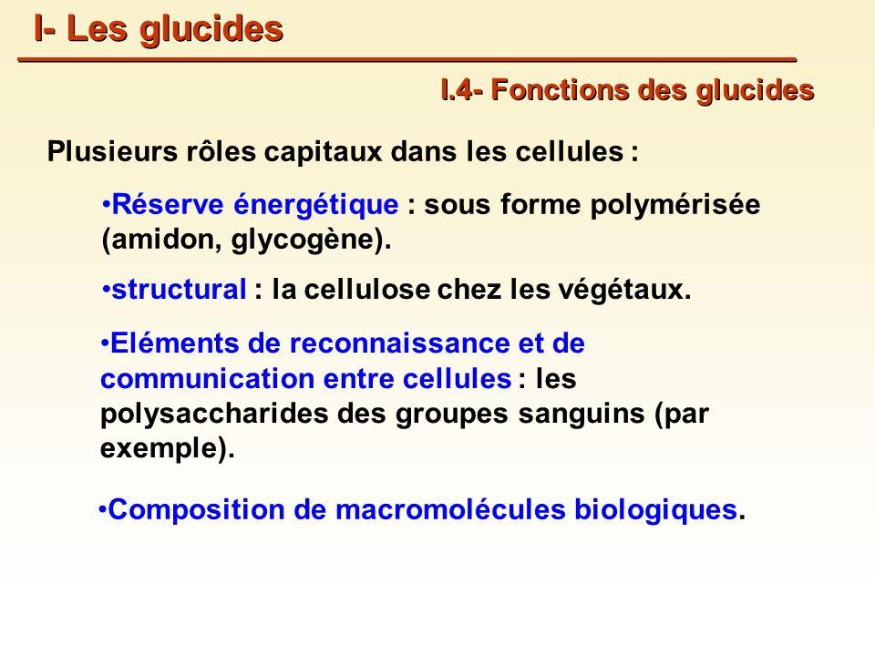 Plusieurs rôles capitaux dans les cellules : Réserve énergétique : sous forme polymérisée (amidon, glycogène).